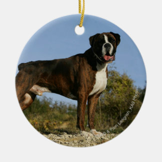 Boxer Dog Show Stance Christmas Ornament