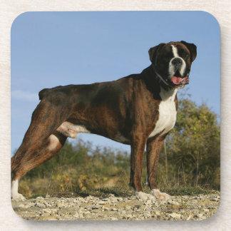Boxer Dog Show Stance Drink Coaster