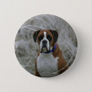 Boxer Dog Sitting in the Frost 6 Cm Round Badge