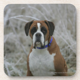 Boxer Dog Sitting in the Frost Beverage Coaster