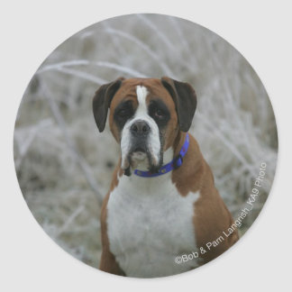 Boxer Dog Sitting in the Frost Round Sticker