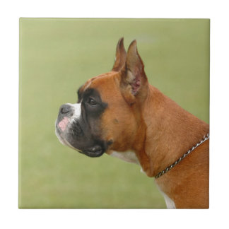 Boxer Dog Small Square Tile