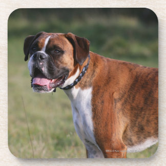 Boxer Dog Standing Beverage Coaster