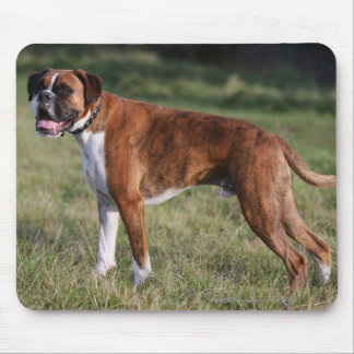 Boxer Dog Standing Mouse Mat
