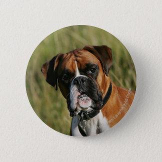 Boxer Dog Staring at Camera 6 Cm Round Badge