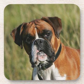 Boxer Dog Staring at Camera Coaster