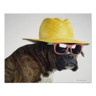 Boxer dog with hat and glasses poster