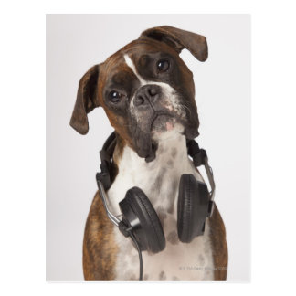 boxer dog with headphones postcard