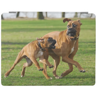 Boxer dogs run a funny race iPad cover