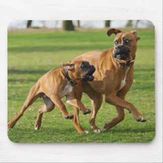 Boxer dogs run a funny race mouse mat