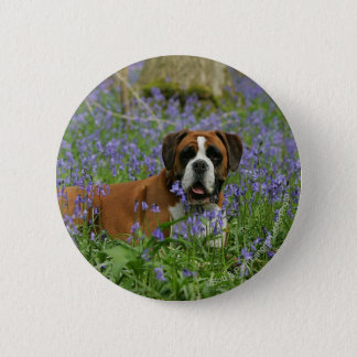 Boxer Laying in Bluebells 6 Cm Round Badge