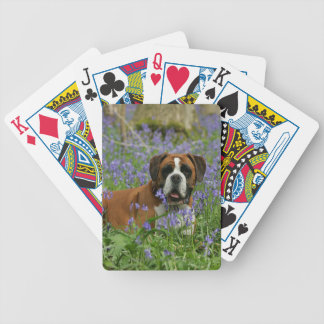 Boxer Laying in Bluebells Bicycle Playing Cards