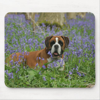 Boxer Laying in Bluebells Mouse Mat
