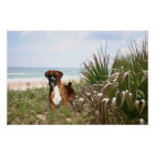 Boxer Poster Hiding In The Beachgrass