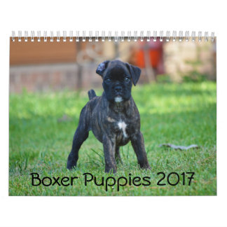 Boxer Puppies 2017 Calendars