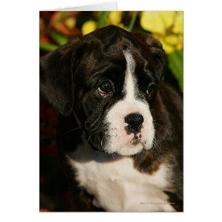Boxer Puppies Card