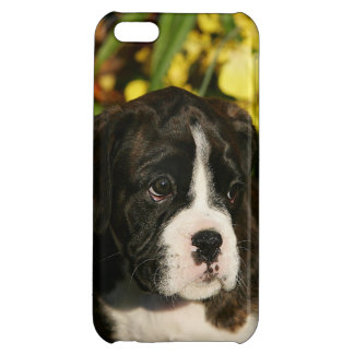 Boxer Puppies Cover For iPhone 5C