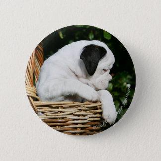 Boxer Puppies in Basket 6 Cm Round Badge