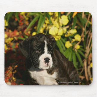 Boxer Puppies Mouse Mat