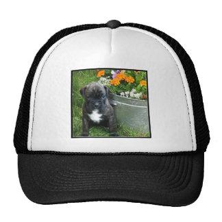 Boxer puppy cap