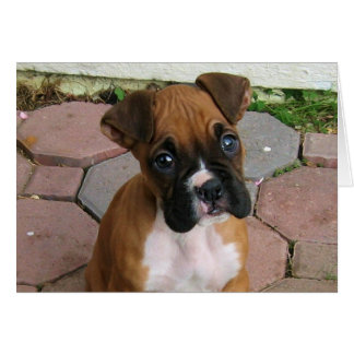 Boxer Puppy Greeting Cards