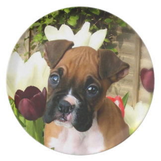 Boxer puppy in tulips party plates