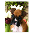 Boxer puppy in tulips postcard