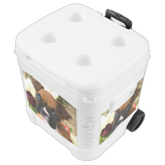 Boxer puppy in tulips roller cooler