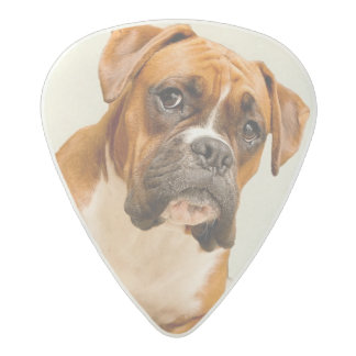Boxer puppy on ivory cream backdrop. acetal guitar pick
