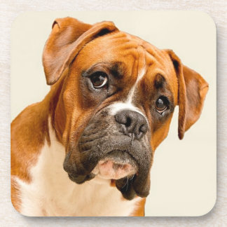 Boxer puppy on ivory cream backdrop. beverage coasters