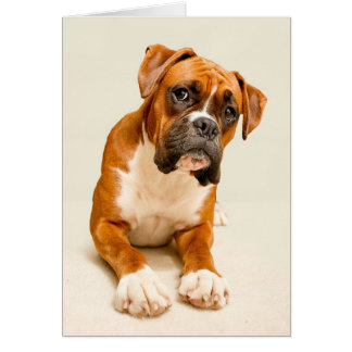 Boxer puppy on ivory cream backdrop. card