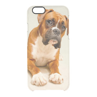 Boxer puppy on ivory cream backdrop. clear iPhone 6/6S case