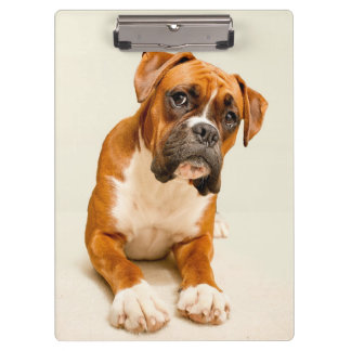 Boxer puppy on ivory cream backdrop. clipboard