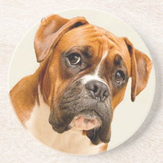 Boxer puppy on ivory cream backdrop. drink coasters