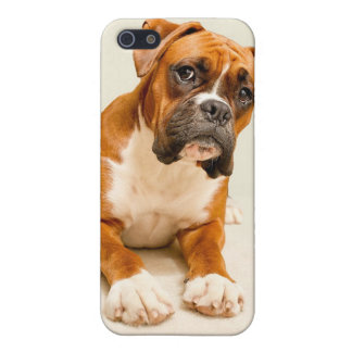 Boxer puppy on ivory cream backdrop. iPhone 5/5S covers