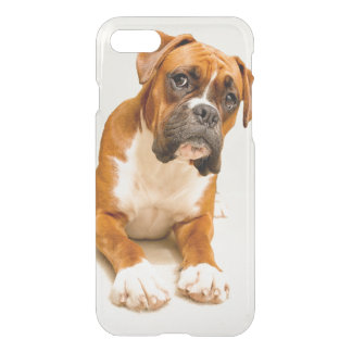 Boxer puppy on ivory cream backdrop. iPhone 8/7 case