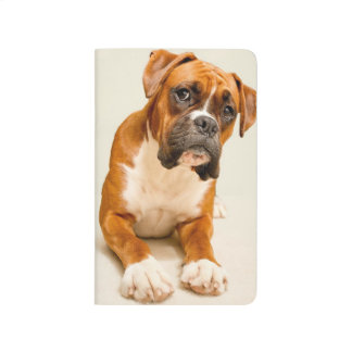 Boxer puppy on ivory cream backdrop. journal