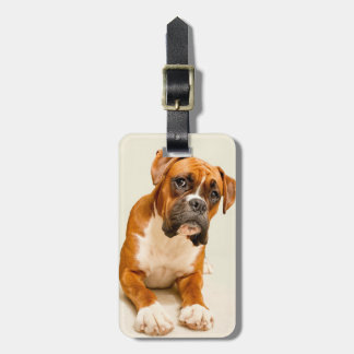 Boxer puppy on ivory cream backdrop. luggage tag