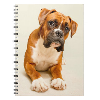 Boxer puppy on ivory cream backdrop. notebooks