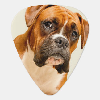 Boxer puppy on ivory cream backdrop. plectrum
