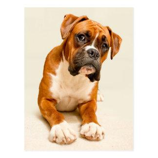 Boxer puppy on ivory cream backdrop. postcard
