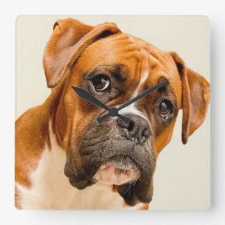 Boxer puppy on ivory cream backdrop. square wall clock