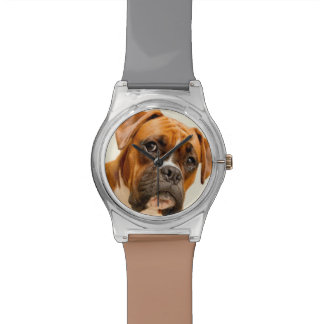 Boxer puppy on ivory cream backdrop. watch