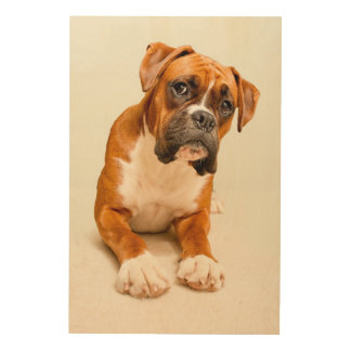 Boxer puppy on ivory cream backdrop. wood canvas
