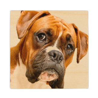 Boxer puppy on ivory cream backdrop. wood coaster