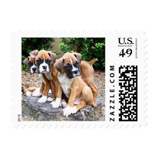 Boxer Puppy Postage Stamps