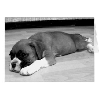 "Boxer puppy "" Sasha"" relaxing greeting card"