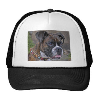 Boxer Reagan Cap