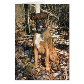 Boxer Woods Walk Greeting Card
