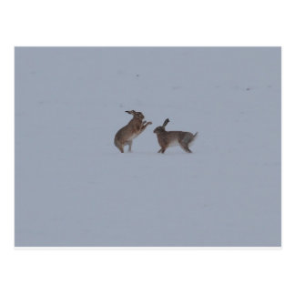 Boxing hares postcard